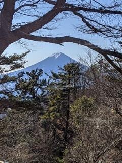 自然,風景,富士山,森林,山