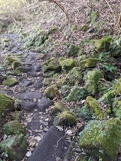 自然,風景,山,苔,岩