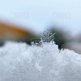 自然,冬,雪,冷たい,結晶,雪の結晶,白銀