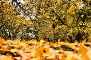 自然,秋,葉,樹木,落葉,草木
