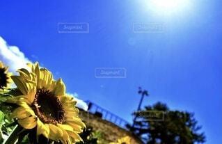 空,花,屋外,青い空,草木