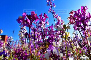 自然,空,花,草木,ブロッサム