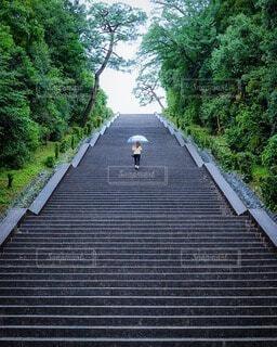 女性,風景,雨,傘,屋外,階段,後ろ姿,景色,樹木,人物,道,草木,フォトジェニック,インスタ映え
