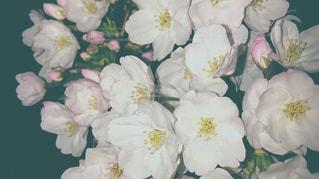 春の写真・画像素材[427101]