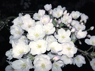春の写真・画像素材[427105]