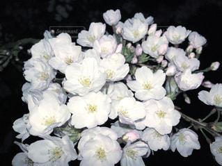 春 - No.427105