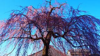 春 - No.427126