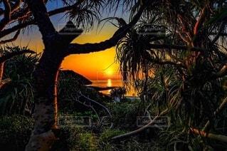 自然,風景,空,太陽,夕焼け,夕暮れ,樹木,ジャングル