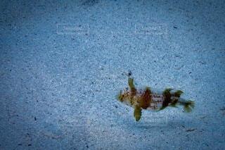 自然,魚,楽しい,水中,ダイビング,シュノーケリング,水中写真,海底,ぽつんと