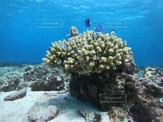 自然,魚,屋外,水族館,水面,岩,ダイビング,珊瑚礁,コーラル,スキューバ ダイビング,シュノーケ リング,海洋無脊椎動物,海洋生物学