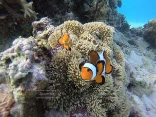 動物,魚,水族館,岩,水中,海洋無脊椎動物
