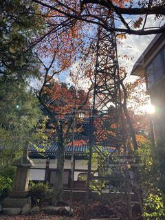 空,秋,紅葉,屋外,樹木,旅行,ノスタルジー,古風