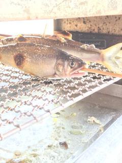 魚,鮎,あゆ