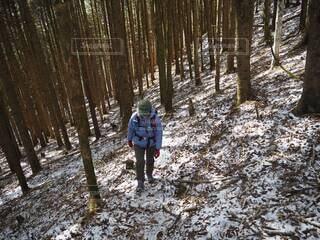 女性,風景,冬,森林,木,雪,屋外,トレッキング,登山,樹木,人,長野,信州,日中,山歩き,低山,山ガール,登山風景