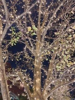 冬,屋外,樹木,イルミネーション,恵比寿,草木