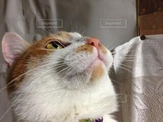 猫,動物,かわいい,子猫,見つめる,髭
