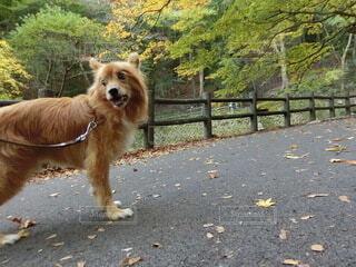 犬,動物,屋外,歩く,散歩