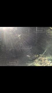 自然,夜空,森,光,愛,ジブリ,不思議,神,豊か,スクリーン ショット