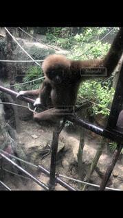 猿,動物,樹木,動物園,霊長類,クマ,サル
