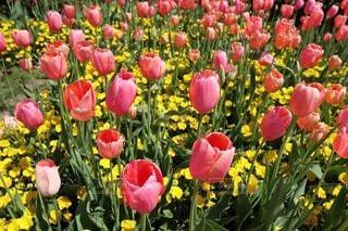 花,春,草木,フローラ