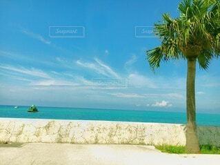 自然,海,空,ビーチ,雲,砂浜,水面,海岸,樹木,ヤシの木,眺め