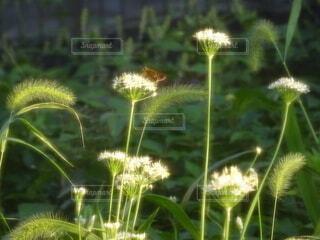 公園,花,屋外,緑,散歩,草,草木