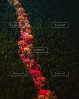 自然,秋,紅葉,森林,森,林,和歌山,紀伊半島