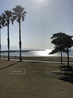自然,風景,海,空,屋外,砂浜,水面,海岸,樹木,ヤシの木,日中
