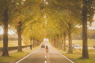 道路の真ん中での写真・画像素材[4026530]