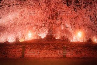 梅の花の写真・画像素材[4238794]