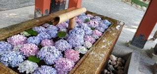 自然,花,神社,紫陽花,お寺
