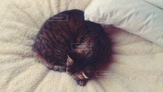 猫,冬,動物,寝る,布団,枕,睡眠,フィルム,愛しい