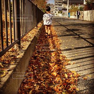 風景,秋,紅葉,屋外,落ち葉,道,人,歩道,地面,幼児