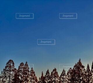 空,屋外,樹木,斜面,日中,雲一つない空,クリスマス ツリー