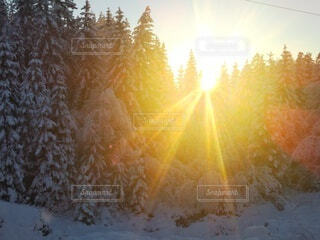 自然,森林,朝日,霧,山,景色,樹木,正月,お正月,日の出,北欧,新年,初日の出
