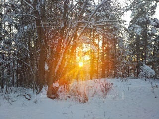 自然,森林,雪,朝日,正月,お正月,日の出,新年,初日の出