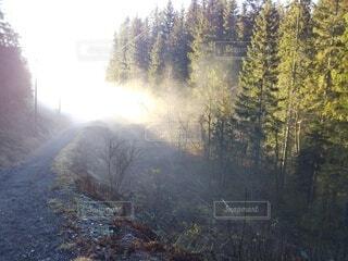 冬,森林,屋外,朝日,青空,山,景色,正月,お正月,日の出,北欧,新年,初日の出,日中