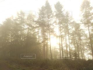 冬,森林,屋外,朝日,霧,山,景色,正月,お正月,日の出,北欧,新年,初日の出,日中