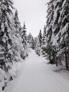 自然,風景,冬,森林,雪,山,氷,樹木,スキー,北欧,斜面,針葉樹