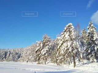 自然,風景,空,冬,雪,青空,山,樹木,北欧