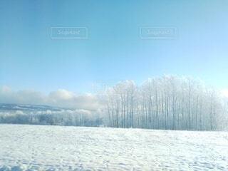自然,風景,空,冬,雪,青空,山,樹木,北欧,冷たい,樹氷