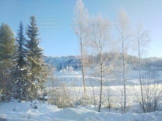 自然,風景,空,冬,森林,雪,青空,樹木,北欧,冷たい,景観,草木