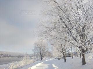 自然,風景,冬,雪,川辺,樹木,霜,北欧,冷たい,樹氷,景観