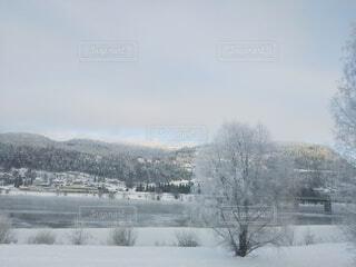自然,風景,冬,木,雪,川辺,山,樹木,北欧,冷たい,景観