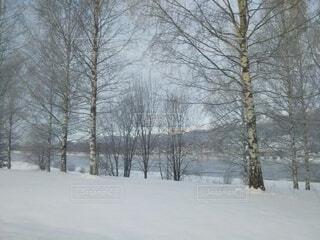 自然,風景,冬,木,雪,川,樹木,北欧,冷たい