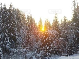 自然,風景,冬,木,雪,太陽,朝日,樹木,北欧,景観