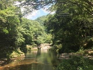 自然,森,川,山