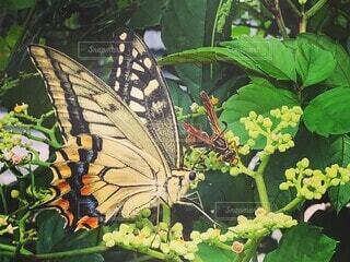 花,動物,昆虫,蝶,草木,蛾や蝶