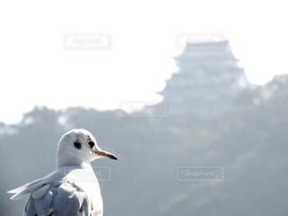動物,鳥,屋外,白,立つ,カモメ,日中