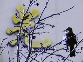 自然,風景,動物,鳥,枝,黄色